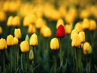 blooming-flowers-648-2
